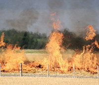 Burning stubble provides benefits for crop rotation