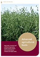 High Quality Forage Crops