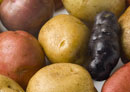 Potato genome sequence published in Nature