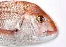 Precision Seafood Harvesting published first results on fish survival