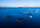 Plant & Food Research joins Blue Economy CRC project exploring the use of floating offshore platforms